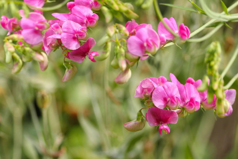 10 Fleurs Faciles À Faire Pousser encequiconcerne Fleur Qui Pousse Au Printemps