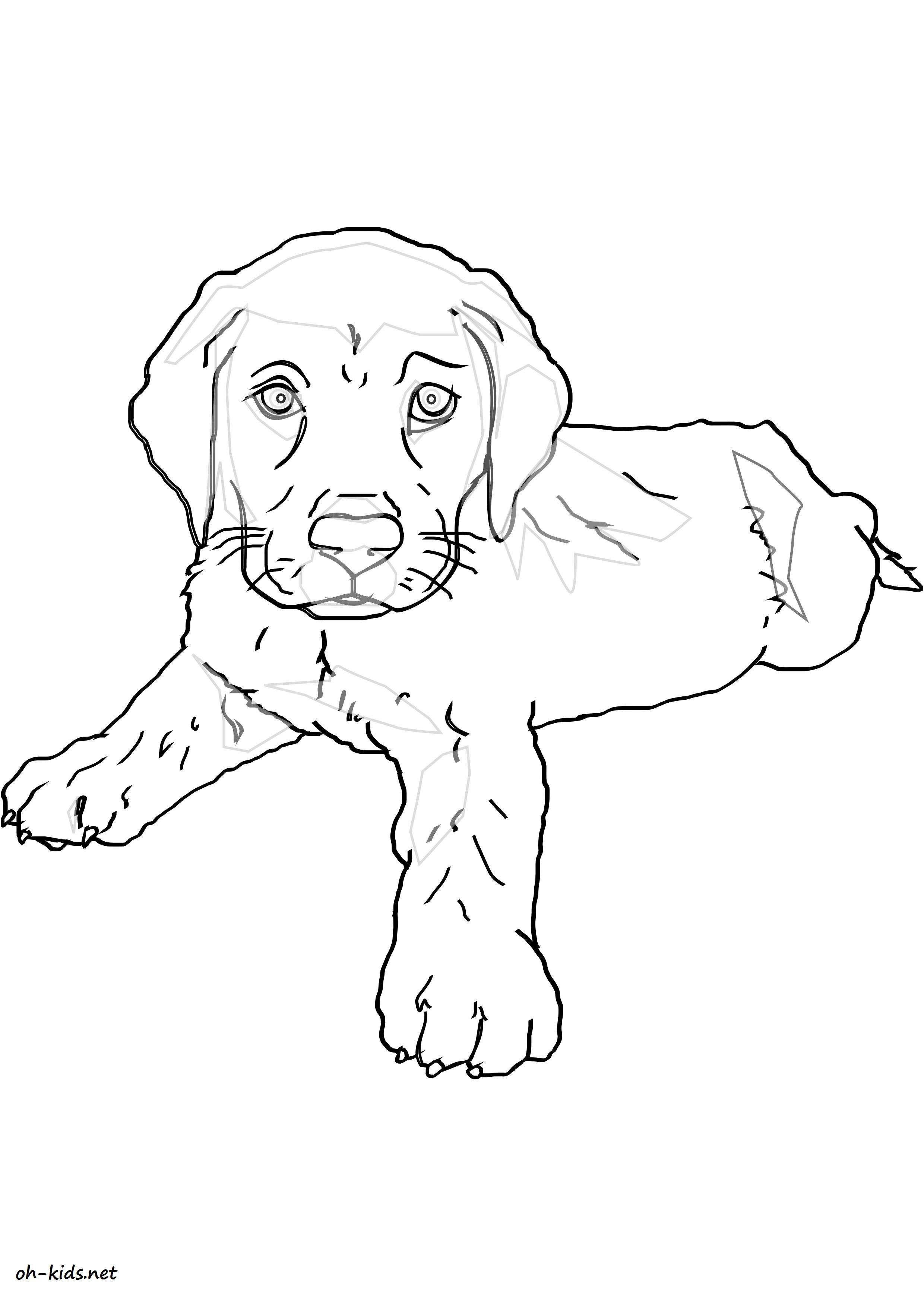 10 Qualité Coloriage Labrador Photos tout Coloriage Labrador