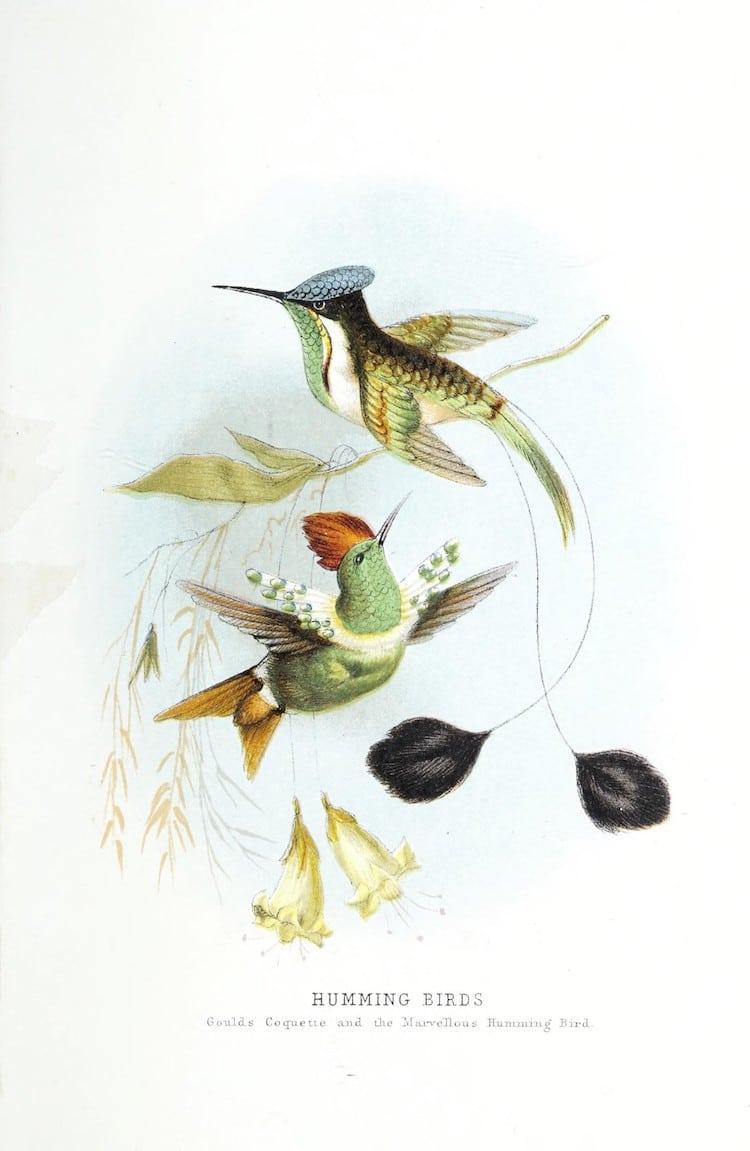 150 000 Illustrations De La Faune Et De La Flore Gratuites tout Images D Oiseaux Gratuites