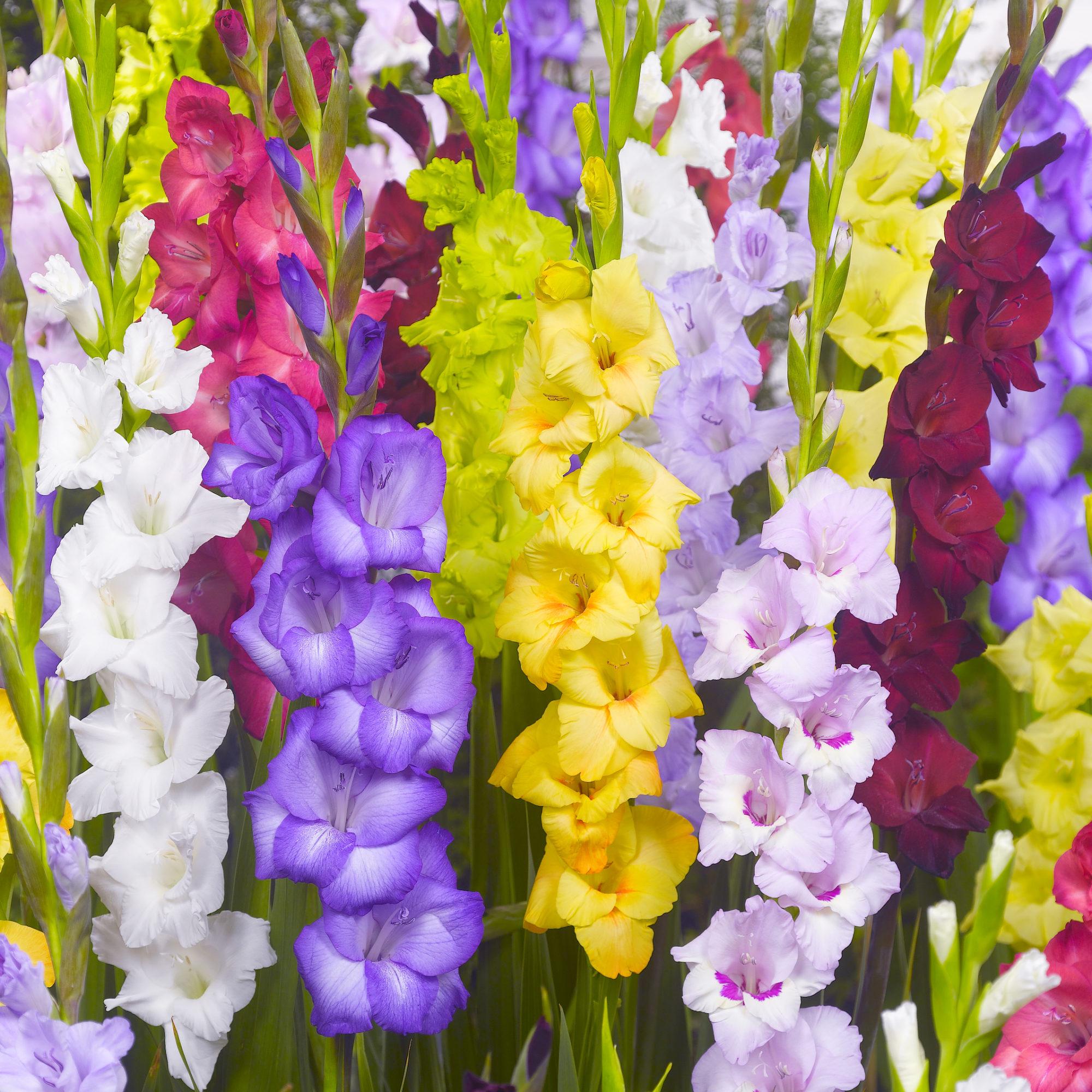 20 Variétés De Bulbes De Printemps : Les Plus Populaires encequiconcerne Fleur Qui Pousse Au Printemps