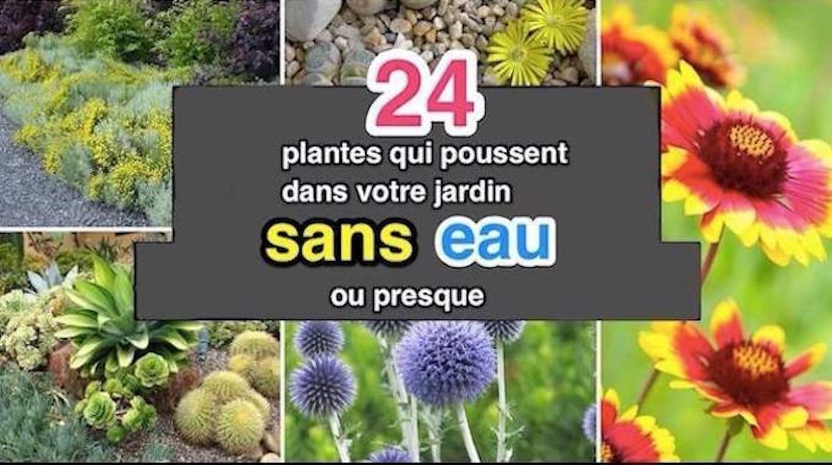 24 Plantes Qui Poussent Dans Votre Jardin Sans Eau (Ou Presque). concernant Fleur Qui Pousse Au Printemps