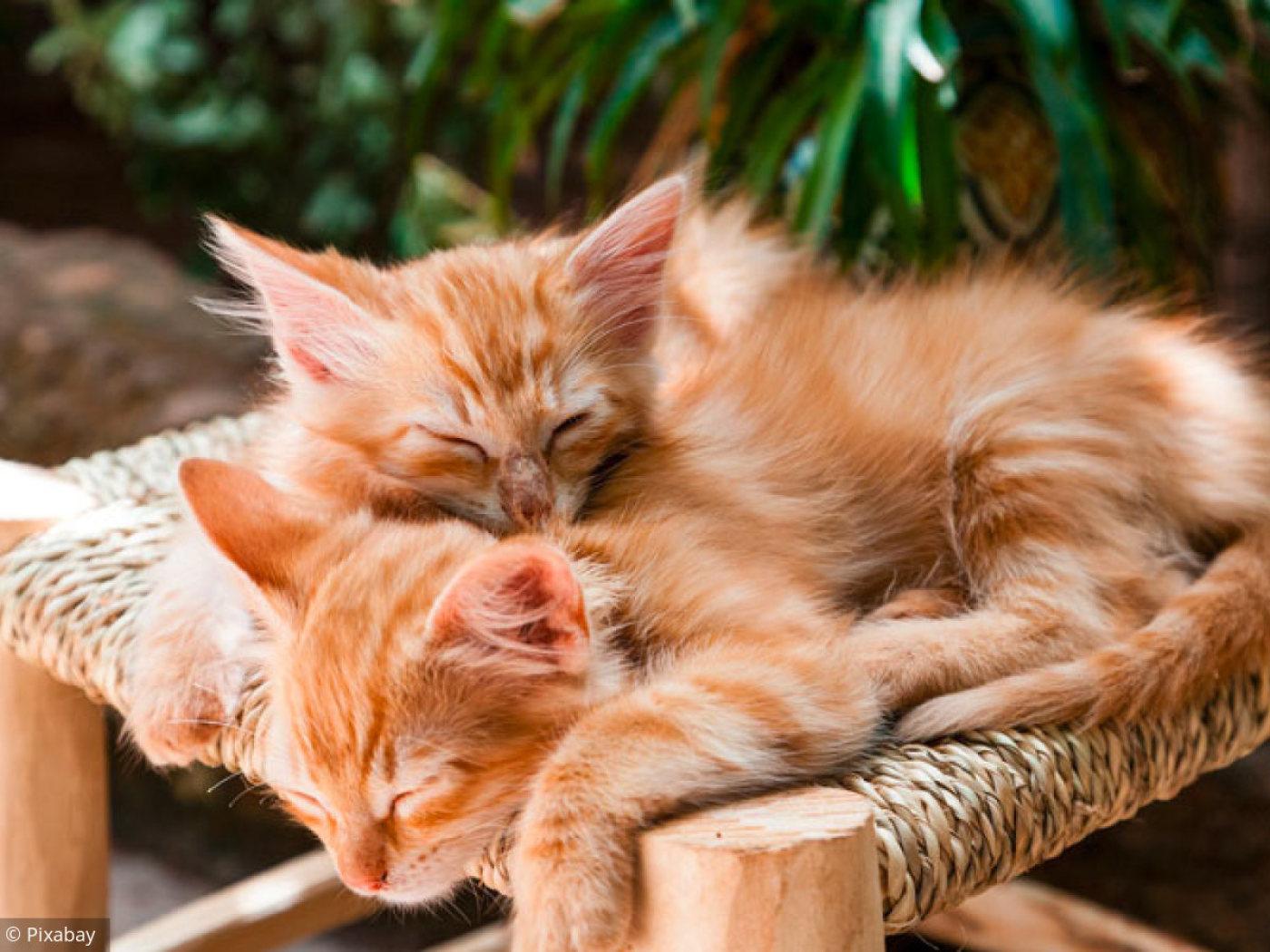 3 Puzzles Pour Amoureux Des Chats dedans Puzzle Gratuit Enfant