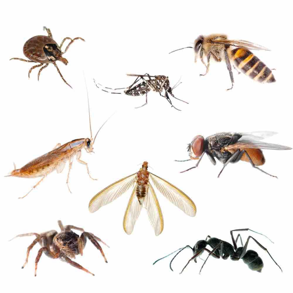 9 Manières Efficaces D'expulser Les Insectes De Votre Maison concernant Les Noms Des Insectes