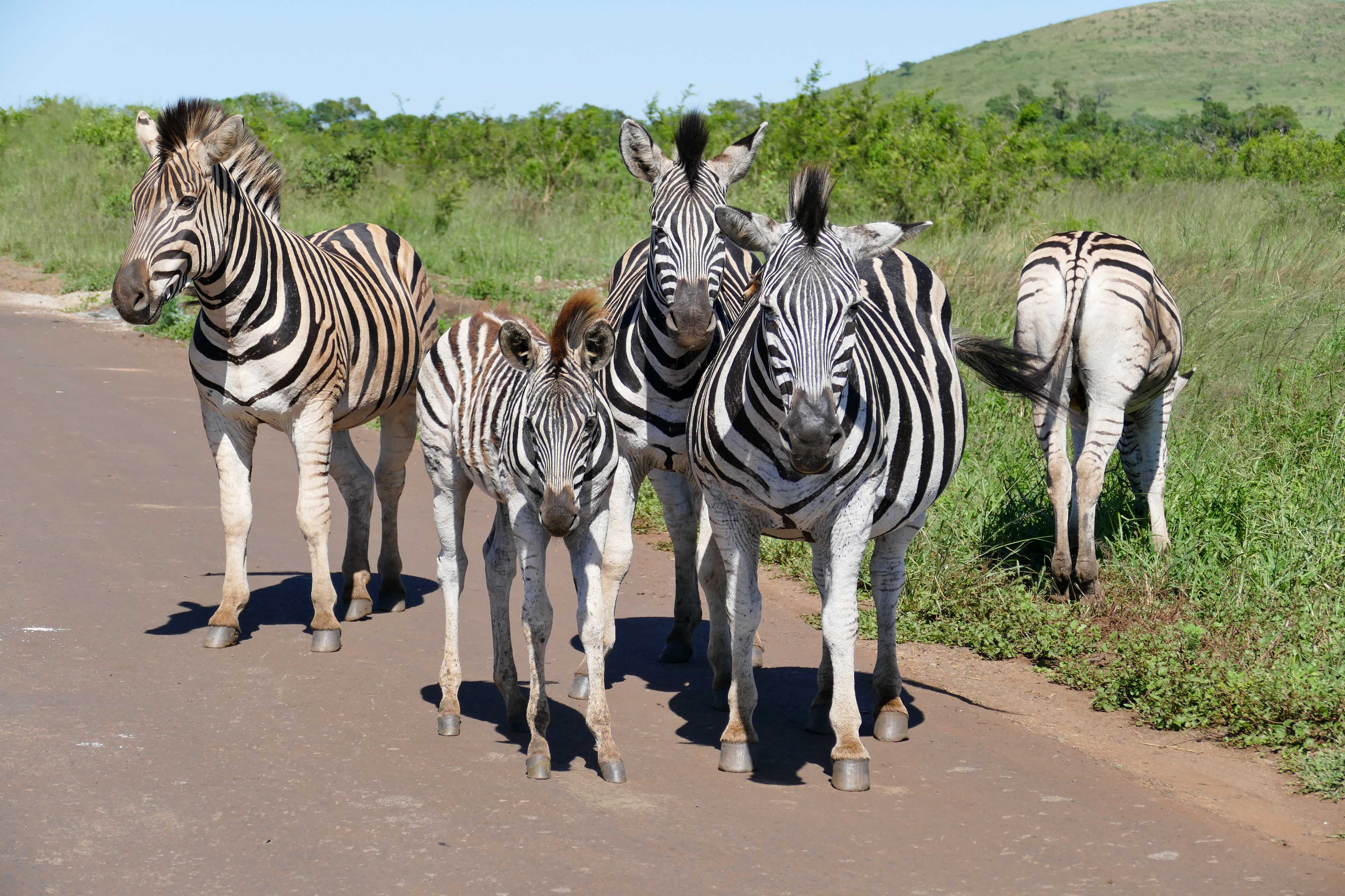A La Rencontre Des Animaux Sauvages En Afrique Du Sud serapportantà Animaux Sauvages De L Afrique