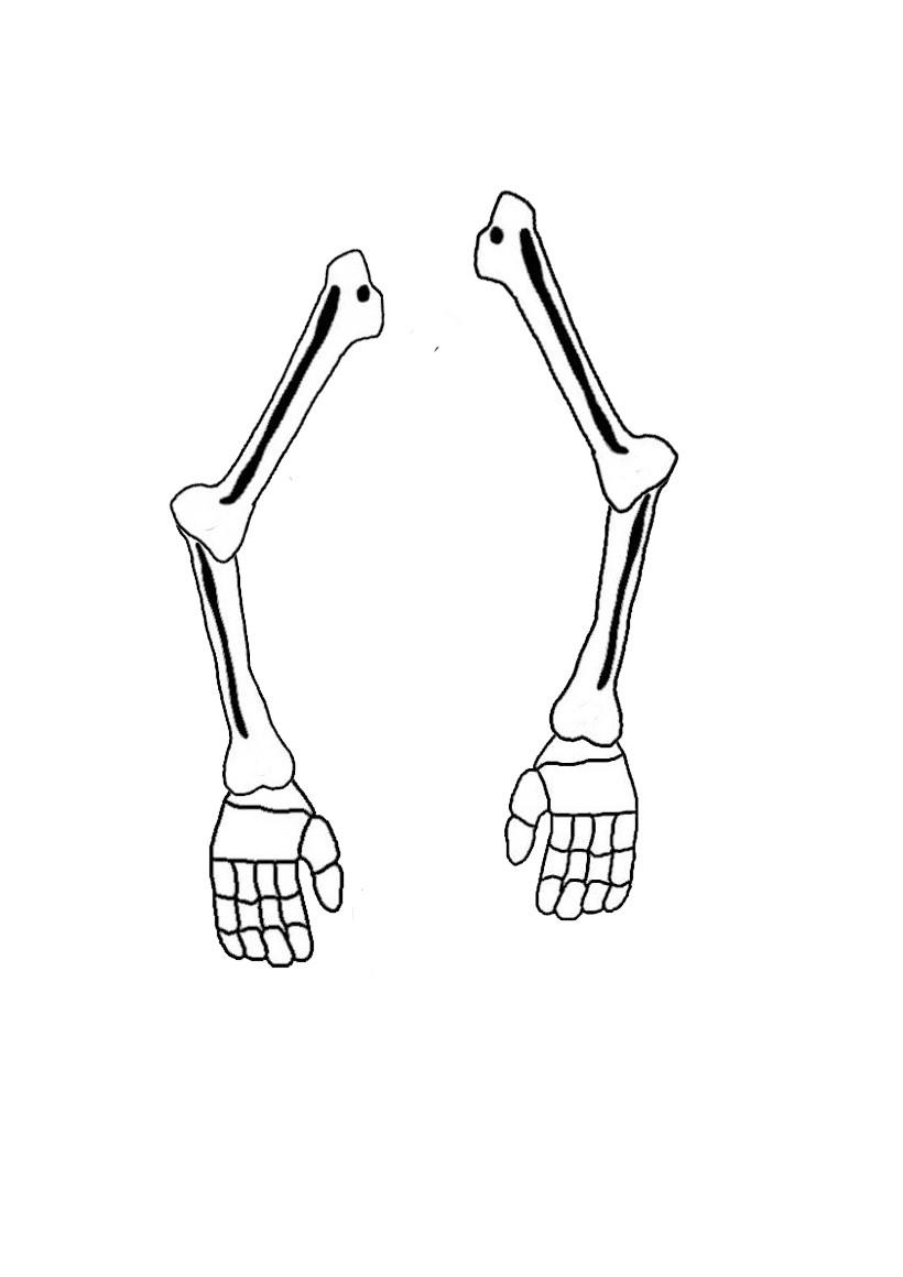 Activités Manuelles Le Squelette Articulé D'halloween - Fr avec Squelette A Imprimer