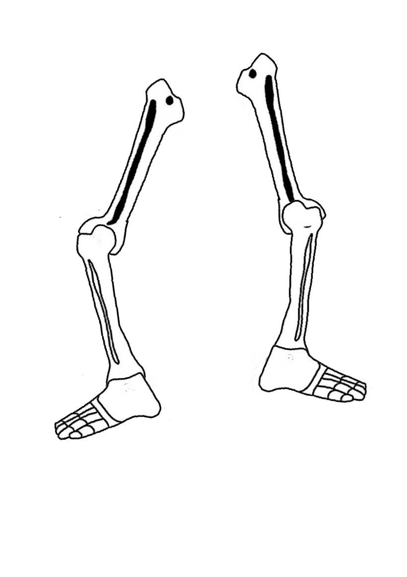 Activités Manuelles Le Squelette Articulé D'halloween - Fr pour Squelette A Imprimer