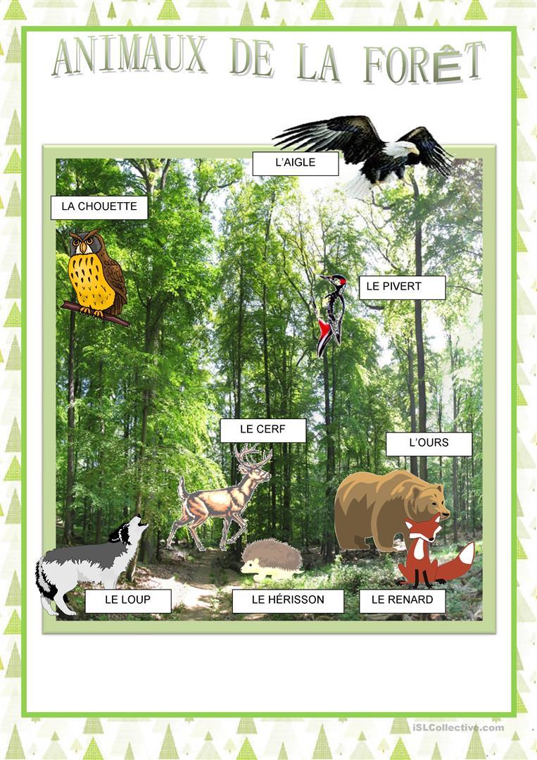 Affiches - Animaux De La Forêt - Français Fle Fiches avec Image D Animaux De La Foret