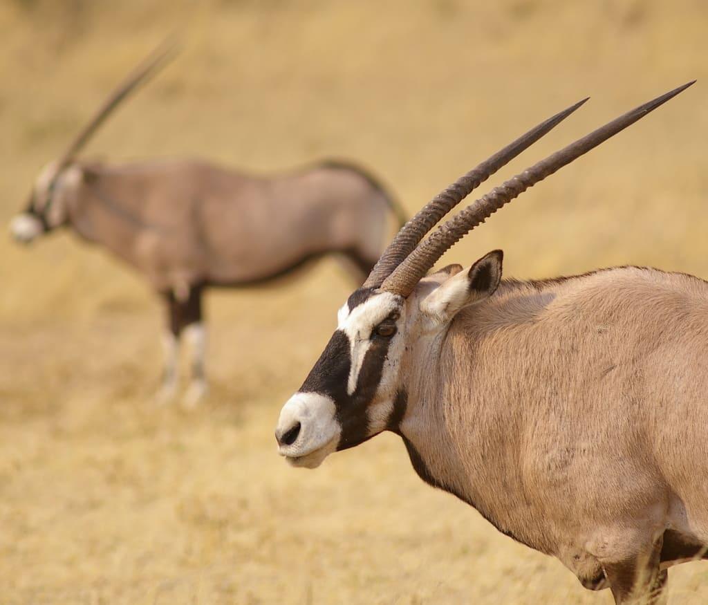 Afrique, Savane Sauvage concernant Animaux Sauvages De L Afrique