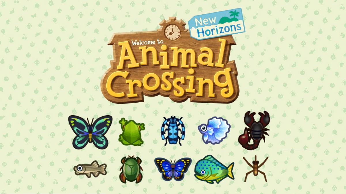 Animal Crossing New Horizons, Les Nouveaux Insectes Et avec Les Noms Des Insectes