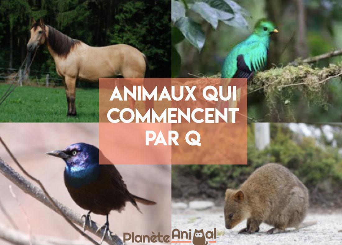 Animal Qui Commence Par Q - En Français Et En Anglais concernant Grimper En Anglais