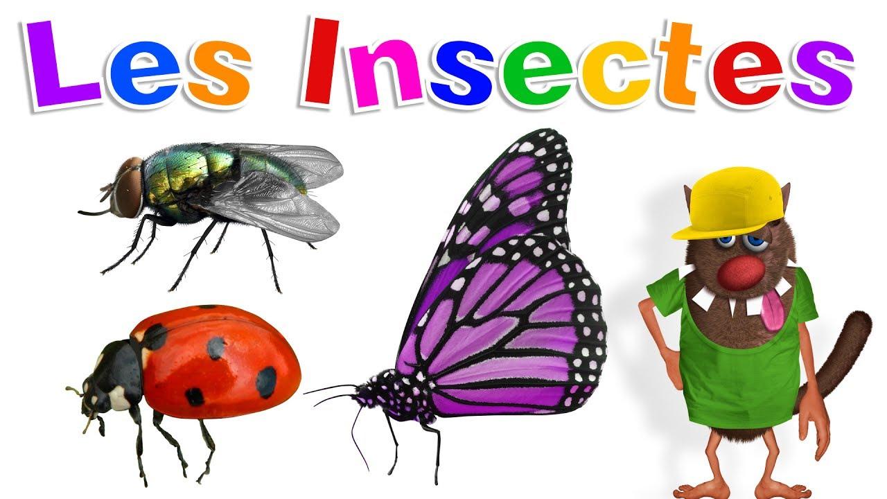 Apprendre Aux Enfants Les Insectes (Learn Insects For Kids - Serie 01) pour Les Noms Des Insectes