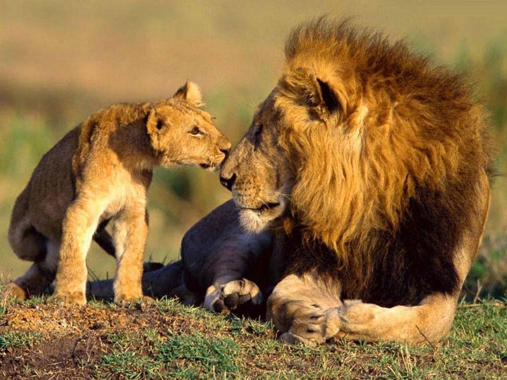 Aucun Texte Alternatif Disponible. | Animaux Sauvages avec Animaux Sauvages De L Afrique