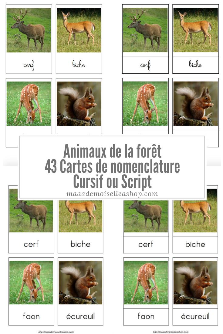 Cartes De Nomenclature - Animaux De La Forêt (43 Cartes + serapportantà Image D Animaux De La Foret