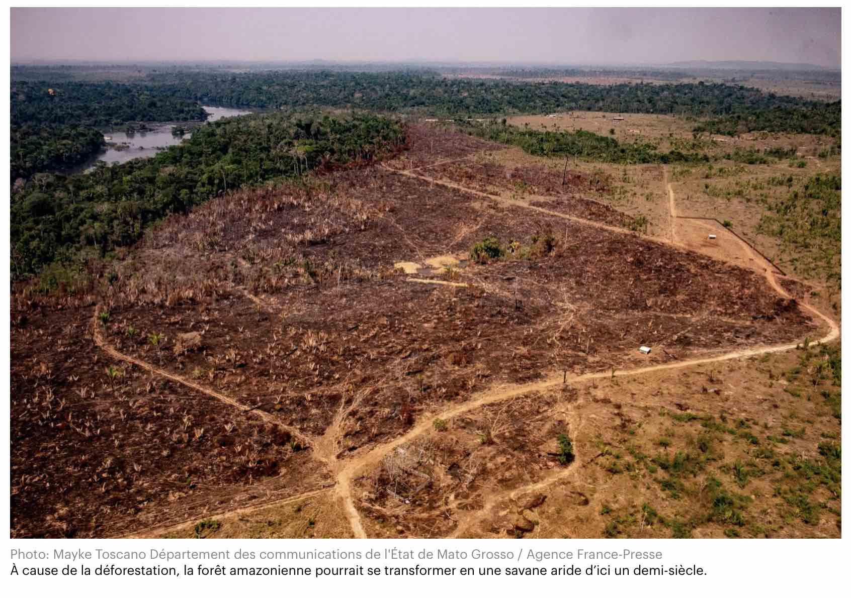 Changement Climatique: L'amazonie Pourrait Disparaître En 50 encequiconcerne Dauphin Amazonie