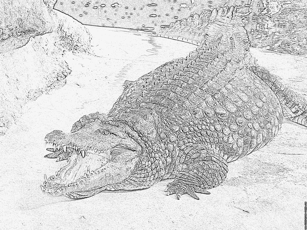 Coloriage A La Ferme Aux Crocodiles À Imprimer Pour Les pour Photo De Crocodile A Imprimer