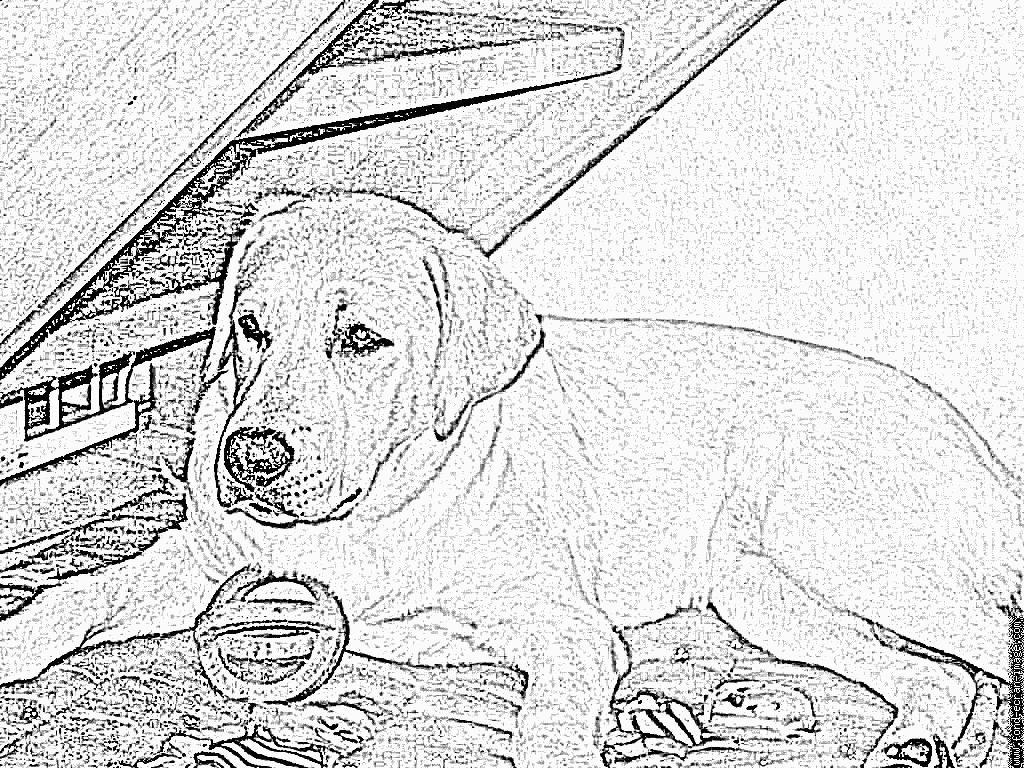 Coloriage Bonnie À Imprimer Pour Les Enfants - Dessin Chien destiné Coloriage Labrador