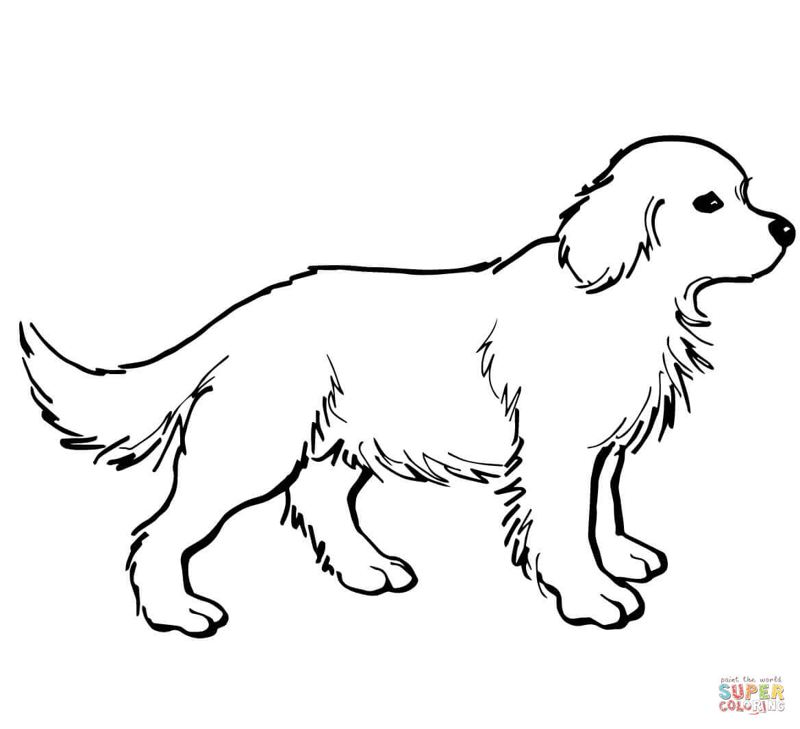 Coloriage - Chiot Golden Retriever | Coloriages À Imprimer avec Coloriage Labrador