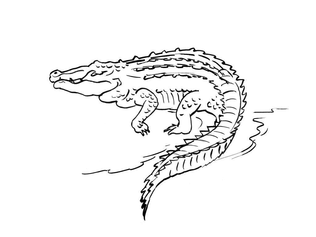 Coloriage Crocodile 6 - Coloriage Crocodiles - Coloriages avec Photo De Crocodile A Imprimer