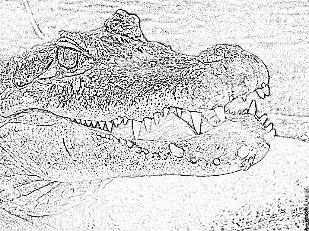 Coloriage Crocodile À Imprimer Pour Les Enfants - Dessin pour Photo De Crocodile A Imprimer