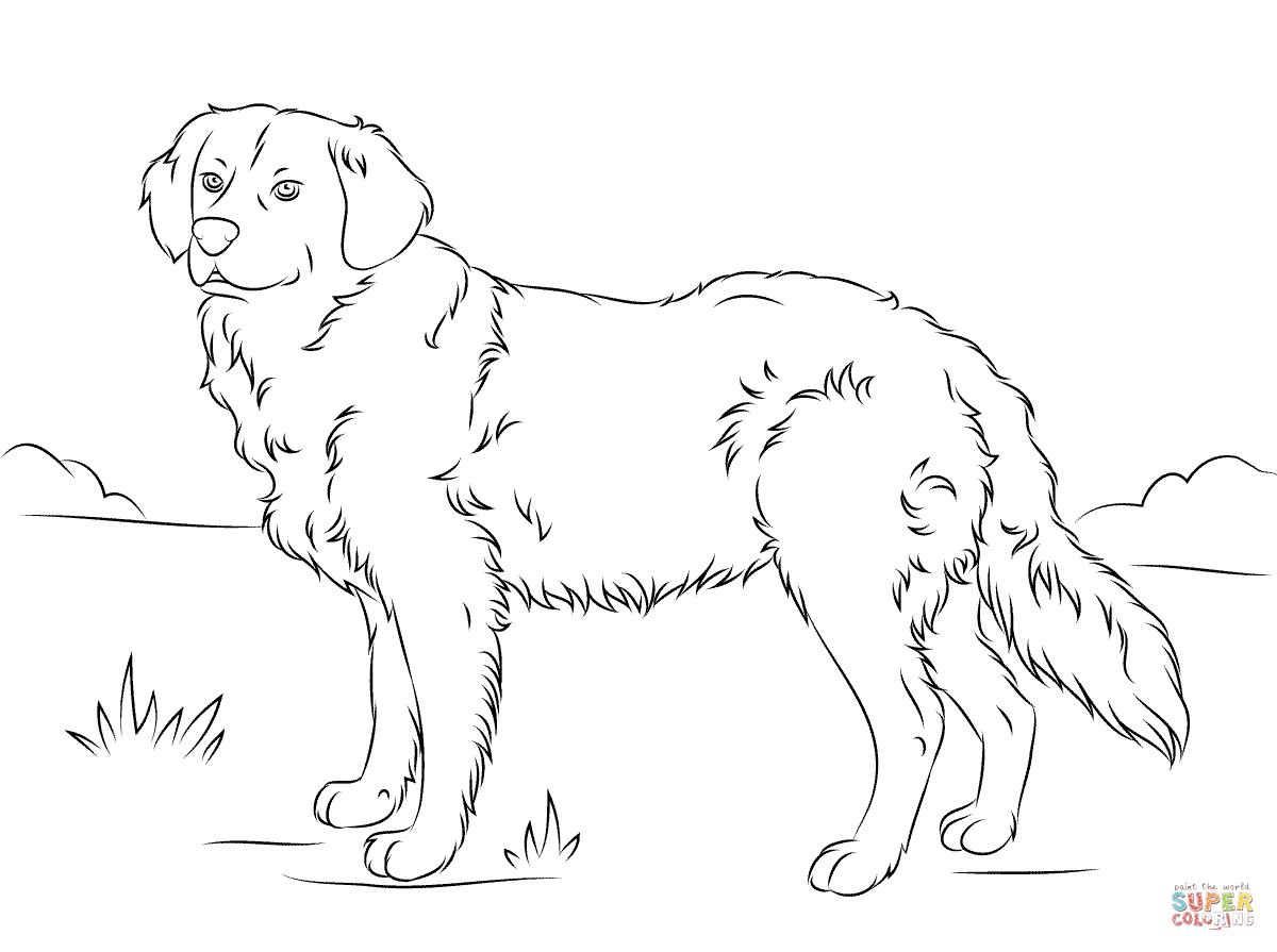 Coloriage - Golden Retriever | Coloriages À Imprimer Gratuits tout Coloriage Labrador