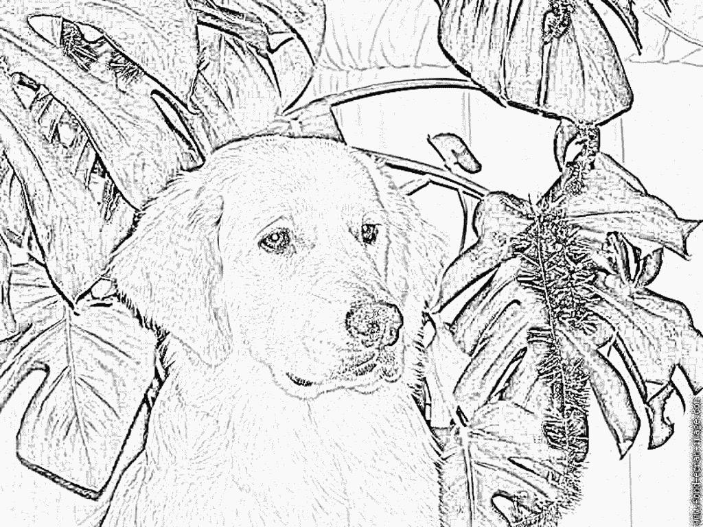 Coloriage Gros Plan Balzac À Imprimer Pour Les Enfants intérieur Coloriage Labrador