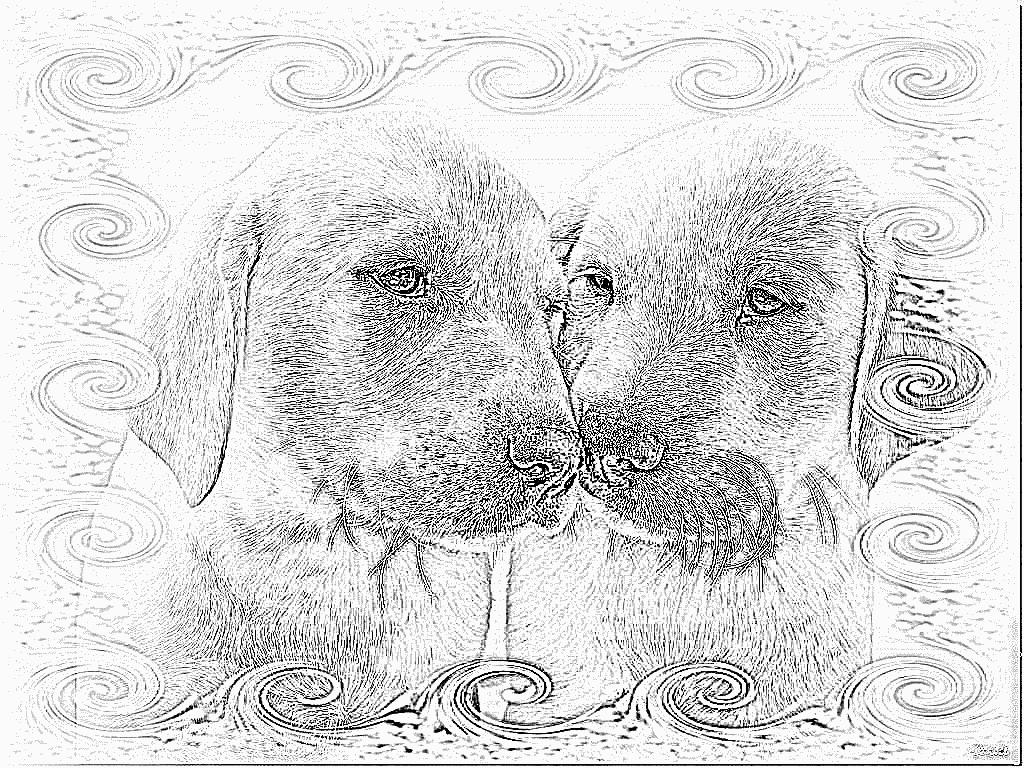 Coloriage Labradors 181108 2 À Imprimer Pour Les Enfants dedans Coloriage Labrador
