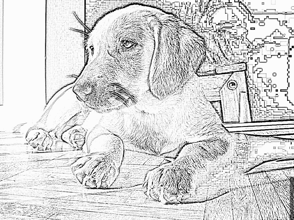Coloriage Loona À Imprimer Pour Les Enfants - Dessin Chien à Coloriage Labrador