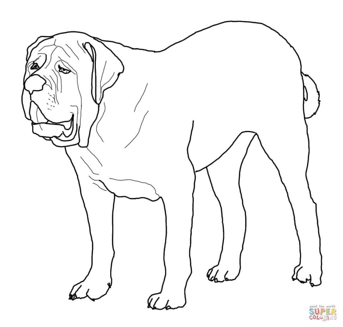 Coloriage - Mastiff | Coloriages À Imprimer Gratuits pour Coloriage Labrador