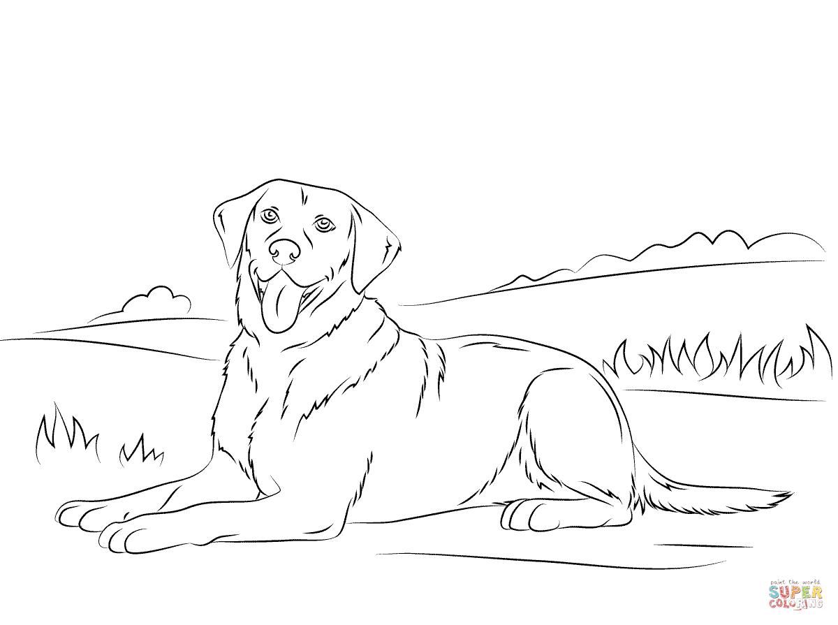 Coloriage - Retriever Du Labrador | Coloriages À Imprimer concernant Coloriage Labrador