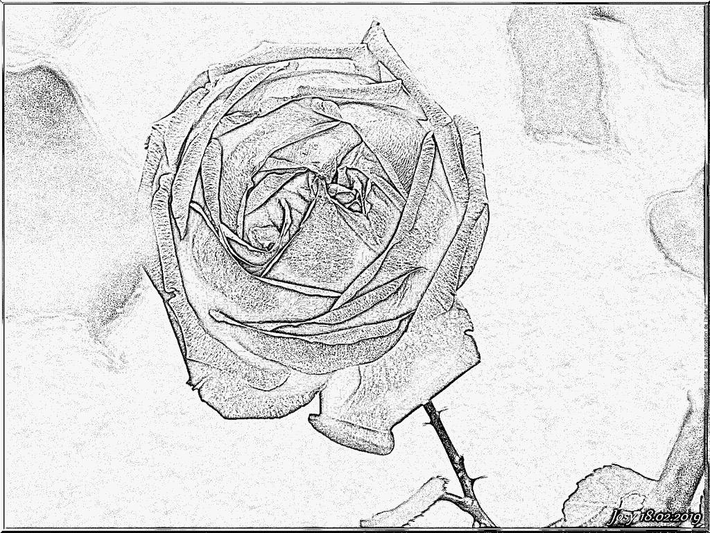 Coloriage Rose De Fevrier À Imprimer Pour Les Enfants encequiconcerne Coloriage Février