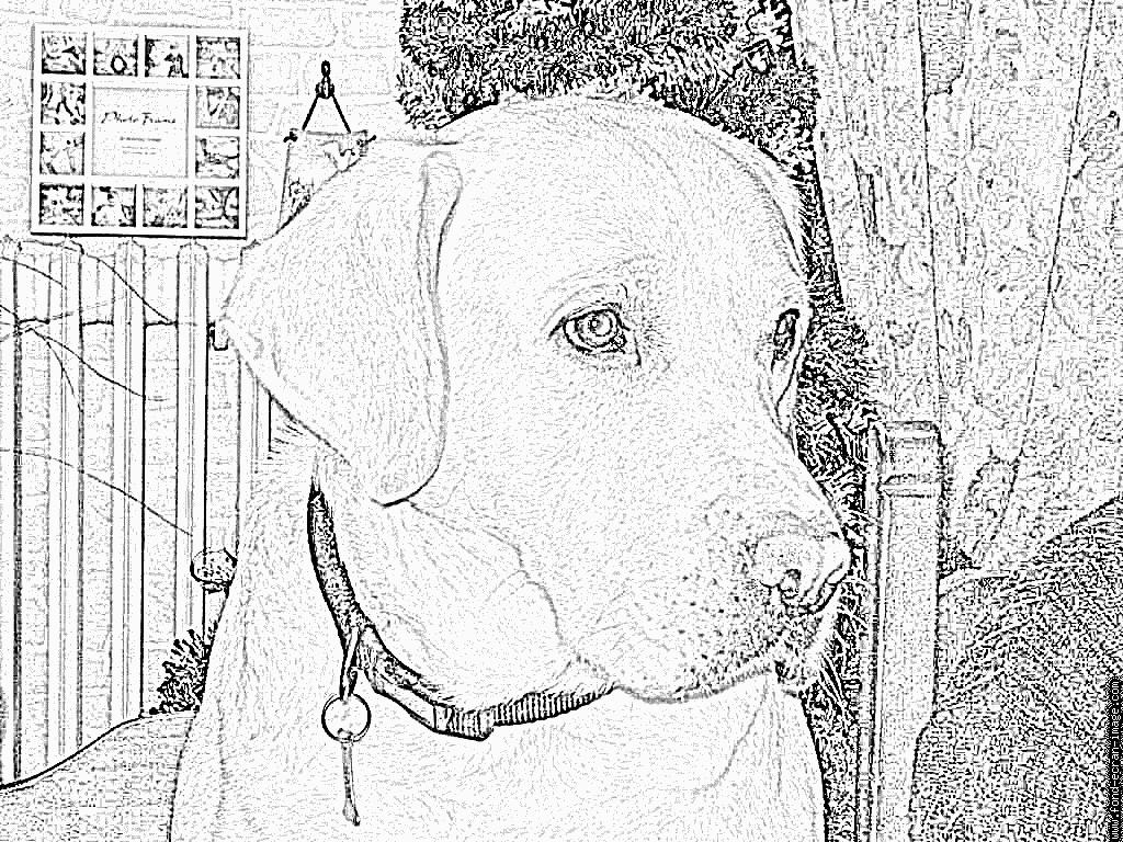Coloriage Sam Noel 2006 À Imprimer Pour Les Enfants - Dessin encequiconcerne Coloriage Labrador