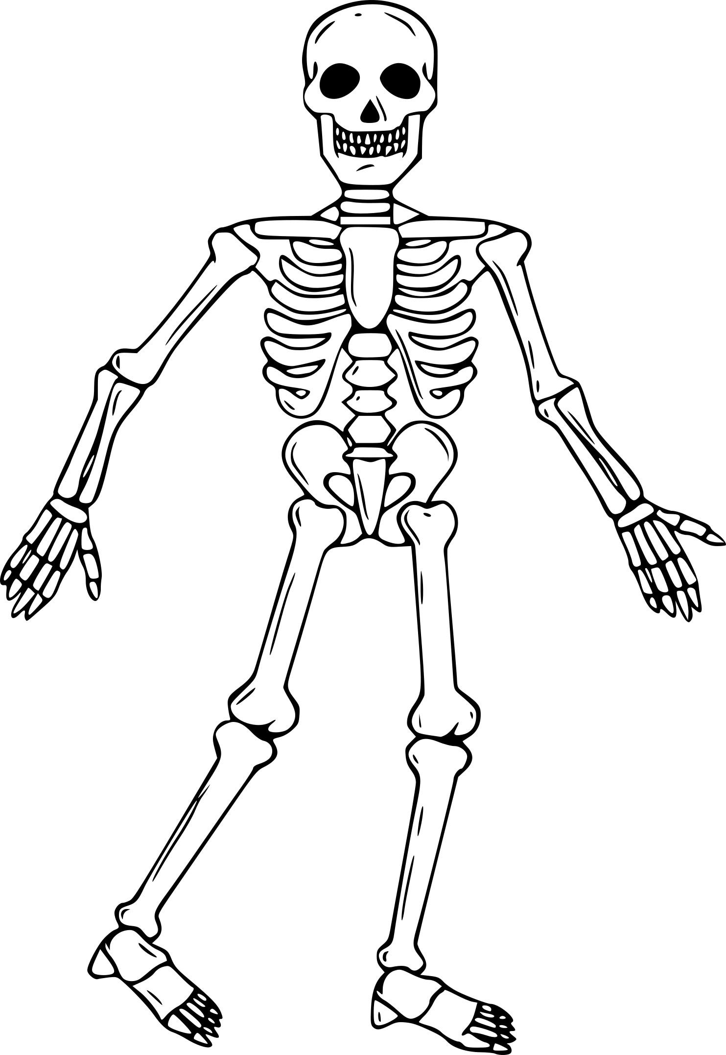Coloriage Squelette À Imprimer Sur Coloriages concernant Squelette A Imprimer