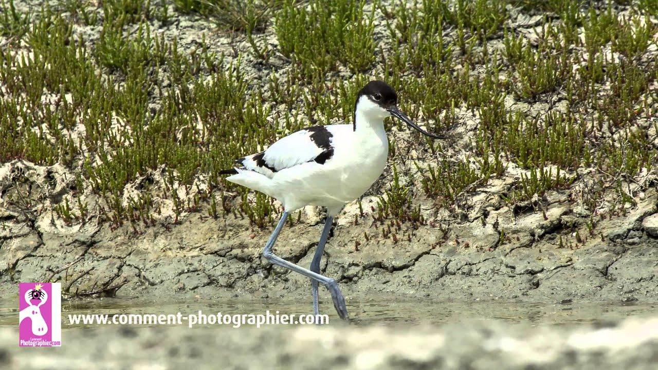 Comment Photographier - Comment Faire Des Photos D'oiseaux Et De Nature -  Cours Photo Gratuit intérieur Images D Oiseaux Gratuites