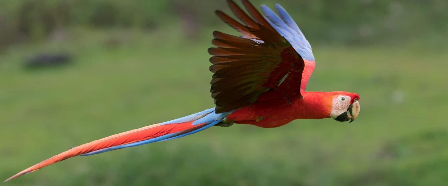 Comment Photographier Les Oiseaux En Vol ? concernant Vol Petit Oiseau
