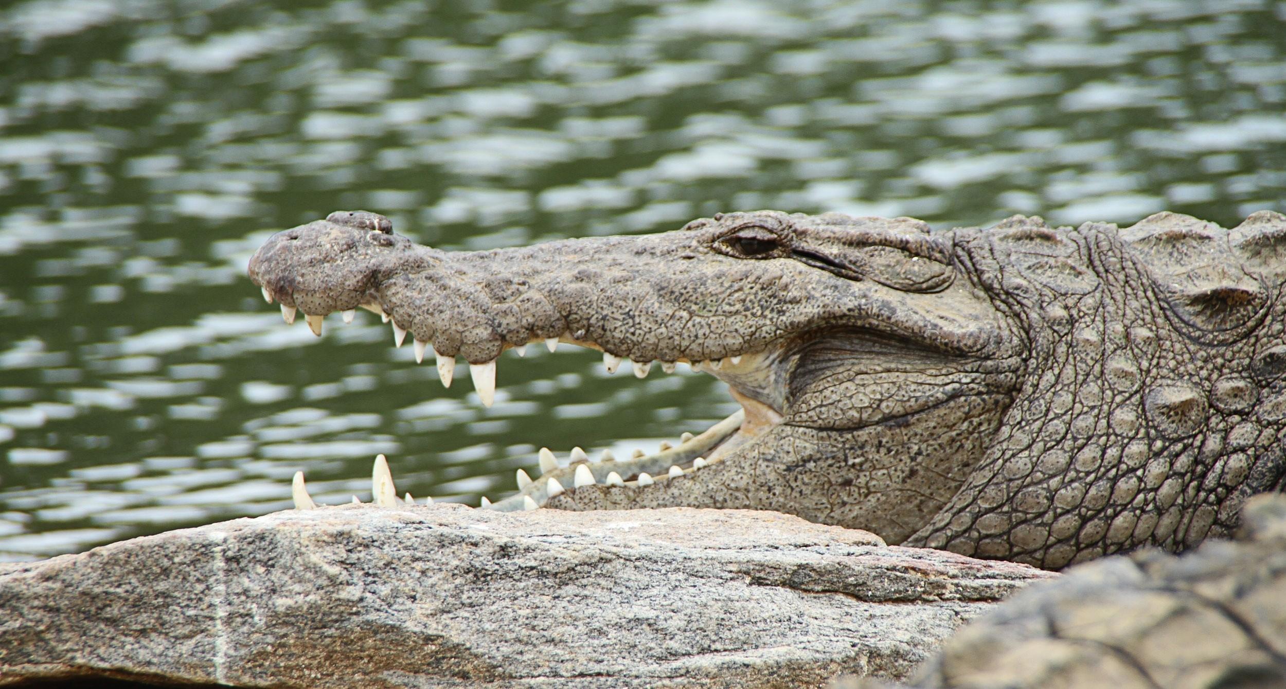 Comptine Les Crocodiles avec Ah Les Cro