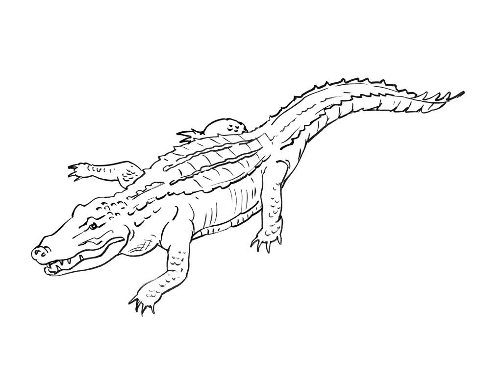 Crocodile #13 (Animaux) – Coloriages À Imprimer avec Photo De Crocodile A Imprimer