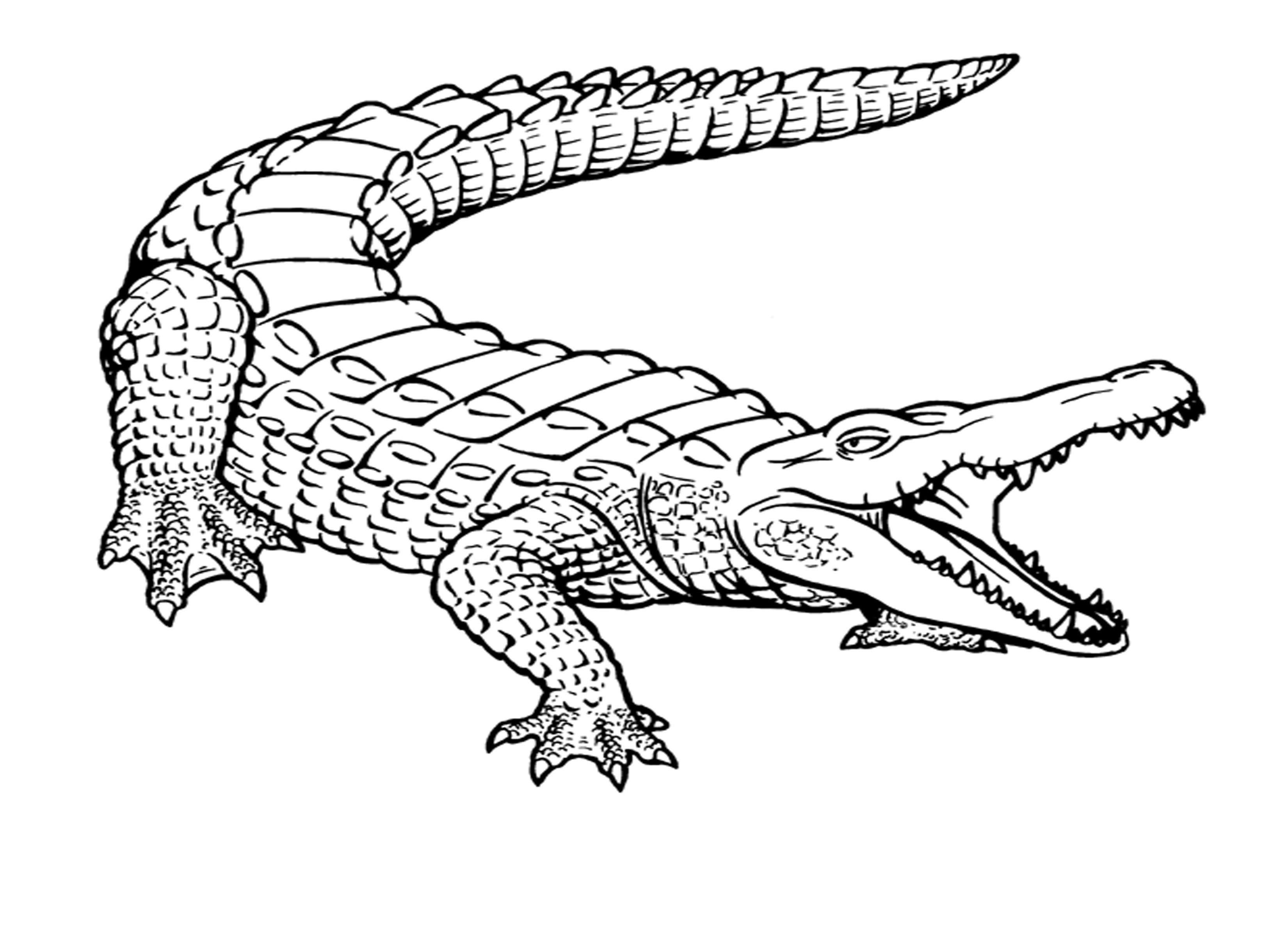 Crocodile-Coloring-Pages-Kids (3300×2400) | Coloriage concernant Photo De Crocodile A Imprimer