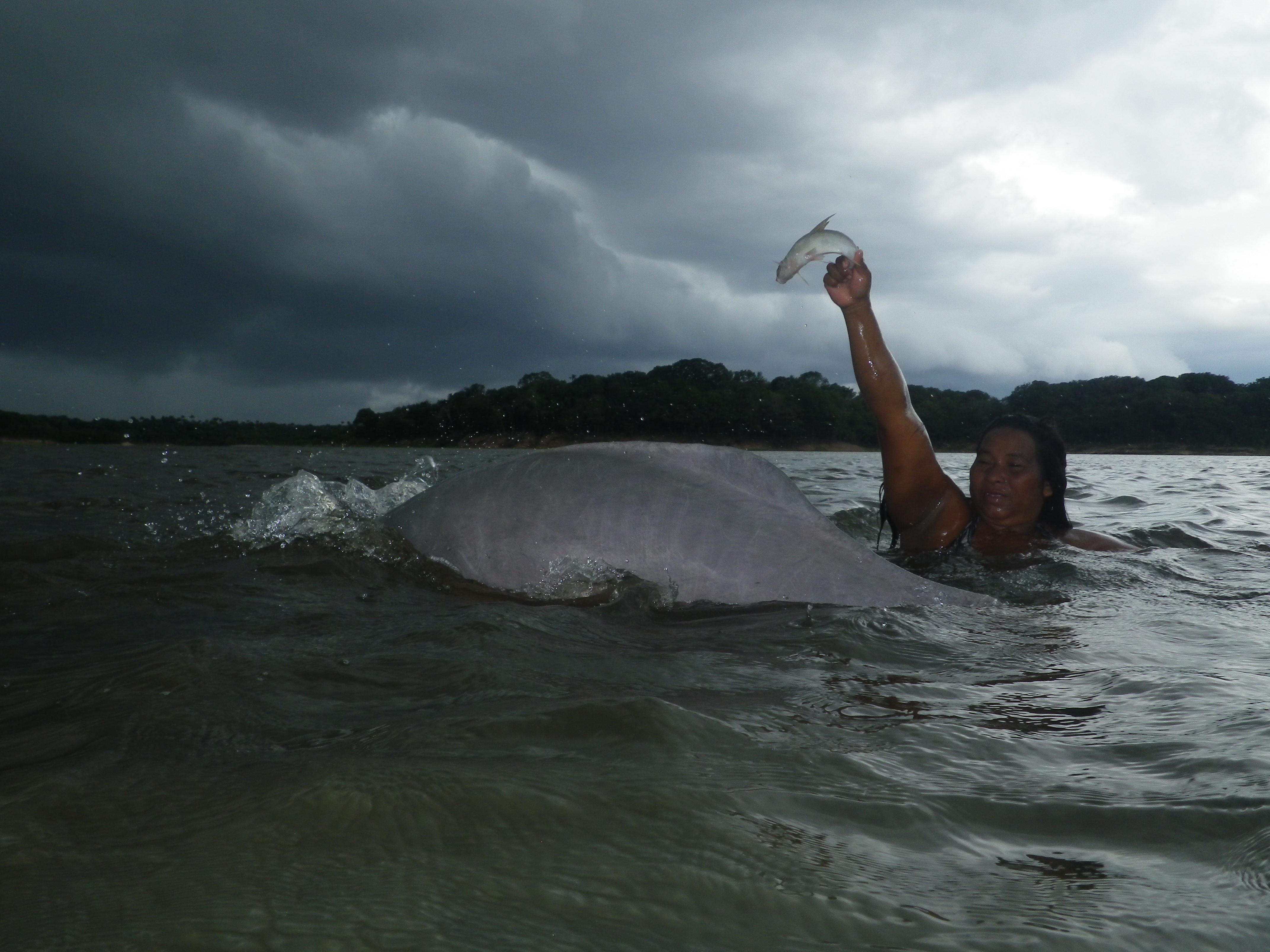 Dauphins | Borria concernant Dauphin Amazonie
