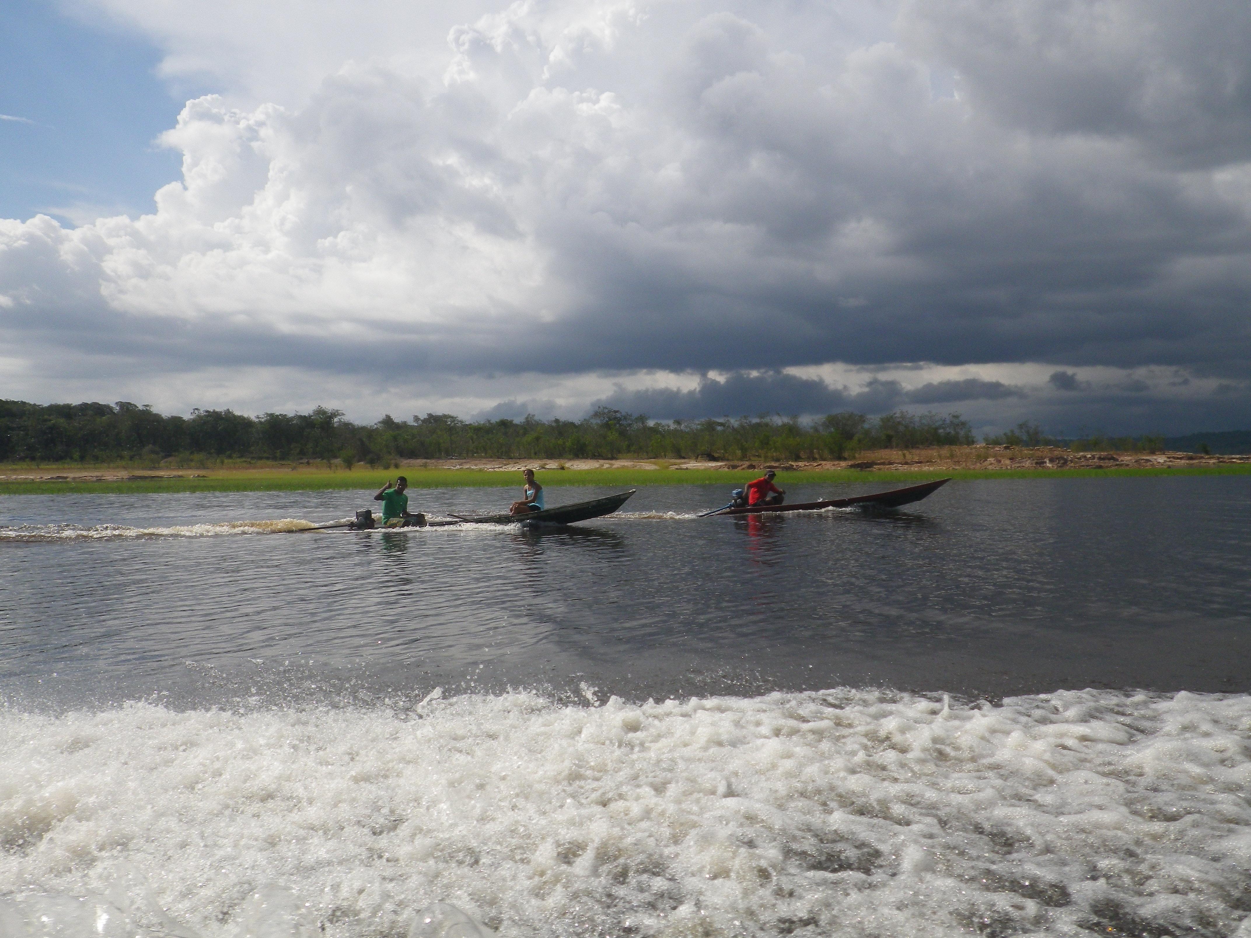 Dauphins | Borria dedans Dauphin Amazonie