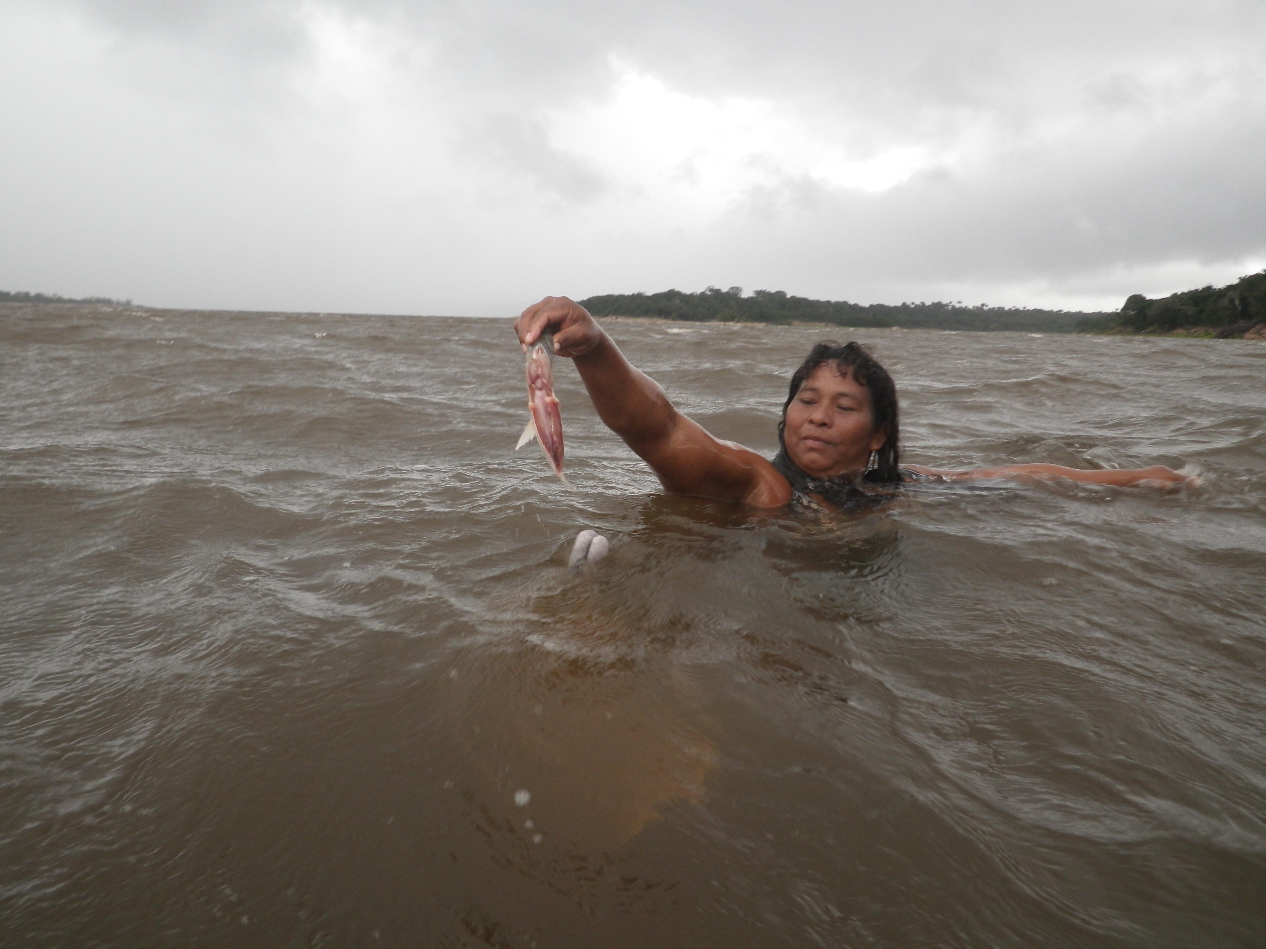 Dauphins | Borria pour Dauphin Amazonie