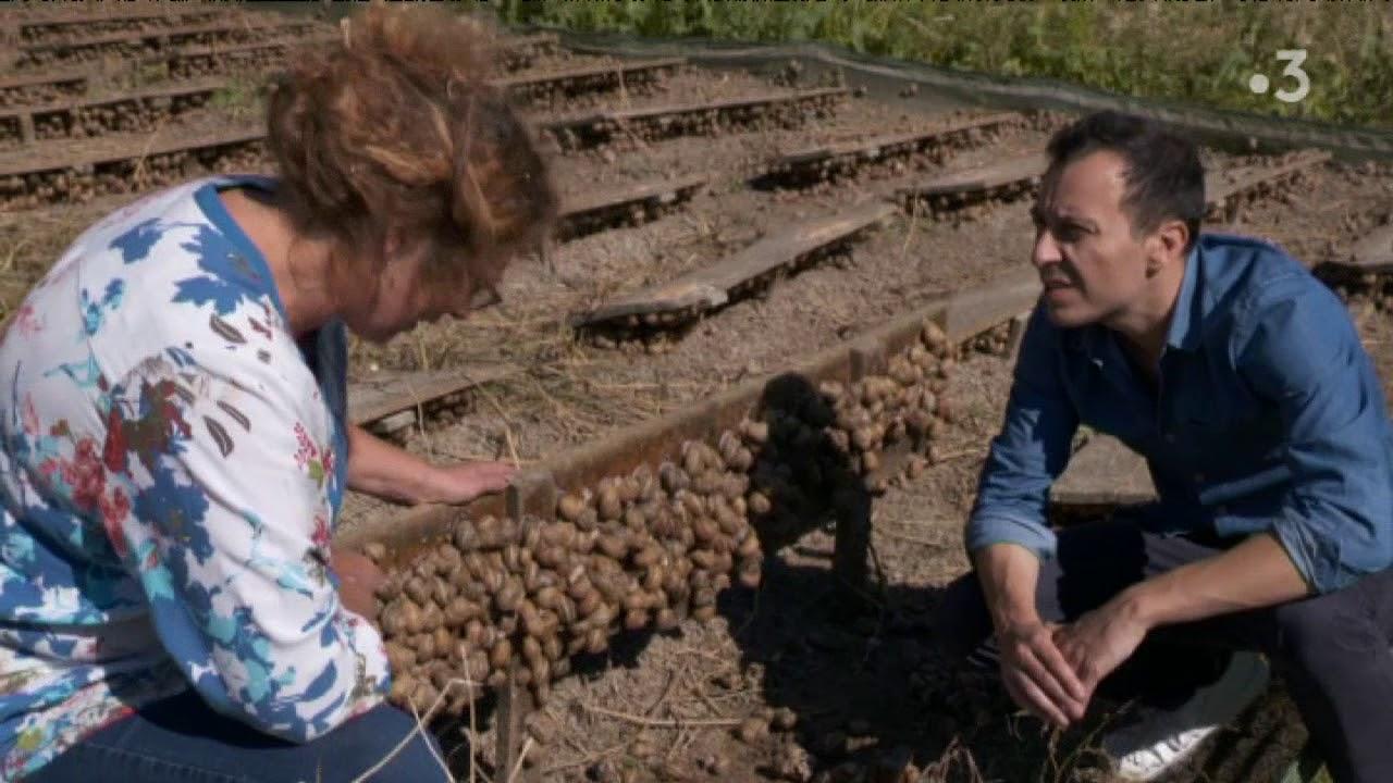 """Découverte De L'élevage """"les Escargots De L'odon"""" Par Laurent Lévêque avec Elevage Escargot"""