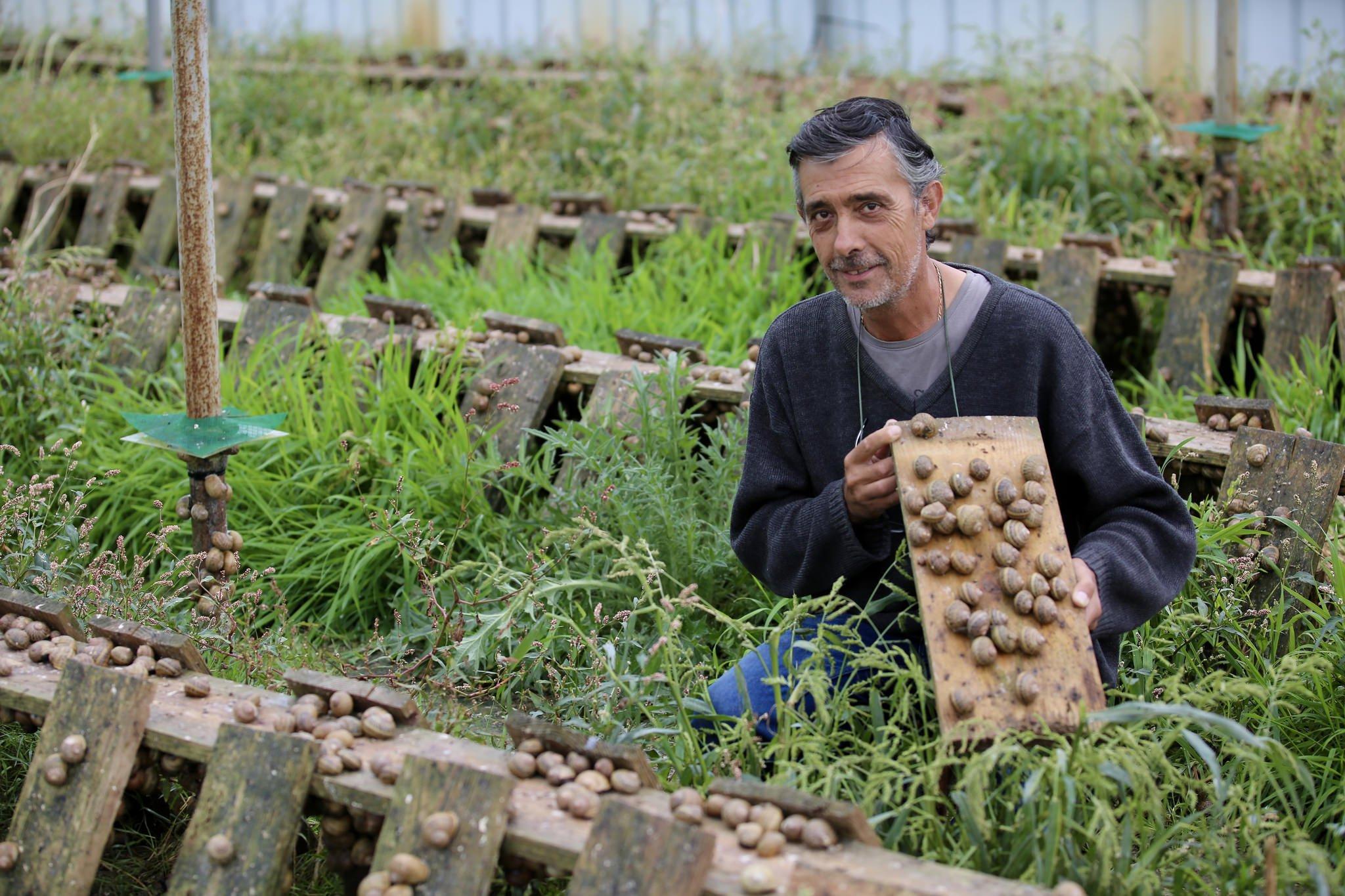 Découvrez La Ferme Insolite De Fanon - Yvelines S destiné Elevage Escargot