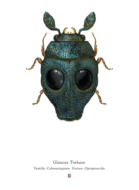 Des Insectes Avec Une Apparence De Star Wars dedans Les Noms Des Insectes