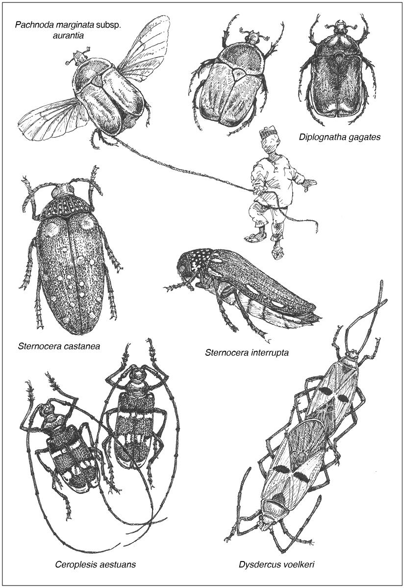 Des Insectes Et Des Hommes (Nord Du Cameroun) pour Les Noms Des Insectes