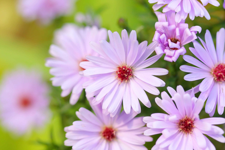 Des Plantes À Floraison Longue, Pour Un Jardin Fleuri Toute encequiconcerne Fleur Qui Pousse Au Printemps