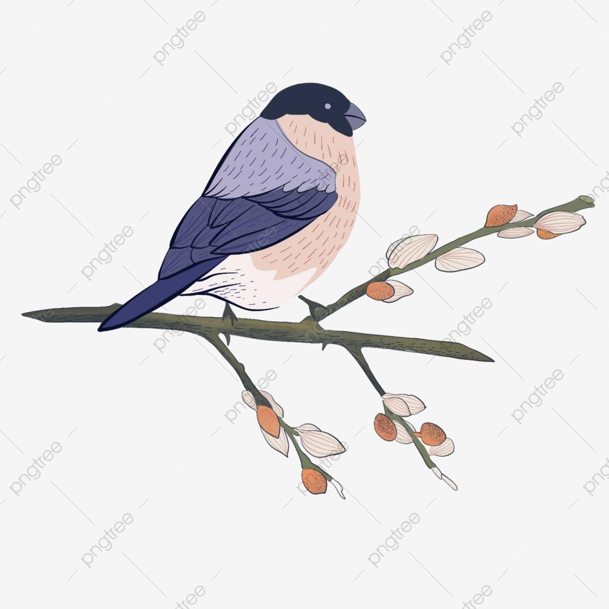 Dessin Animé Petit Oiseau Bleu Illustration Gratuite De pour Images D Oiseaux Gratuites