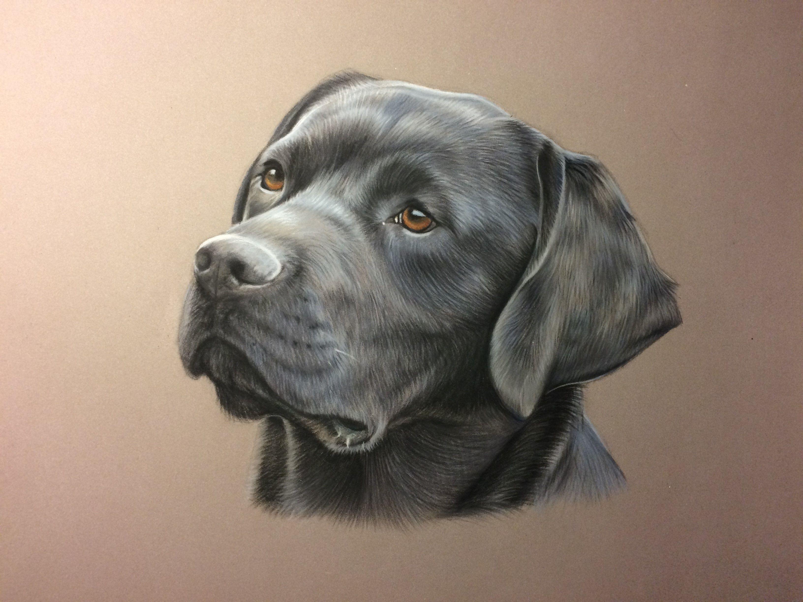 Dessin De Labrador Au Pastel | Dessin Chien, Uages Chien tout Coloriage Labrador