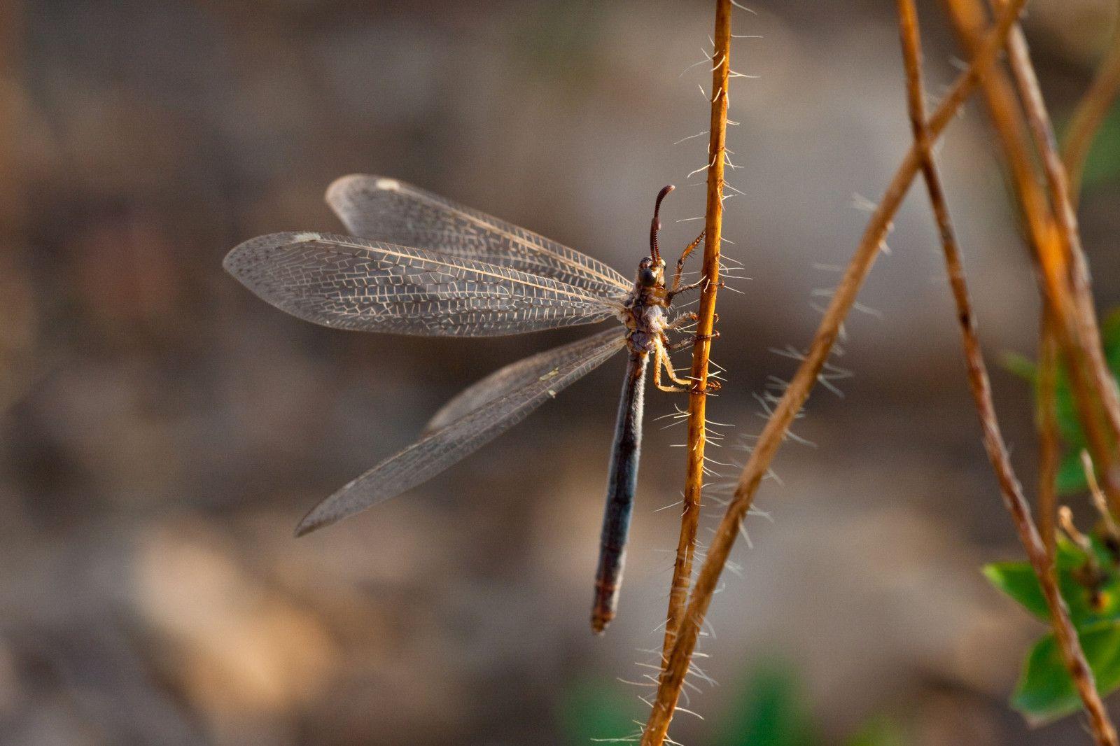 Deux Insectes Volants - Fabrice Camp Photographie concernant Les Noms Des Insectes