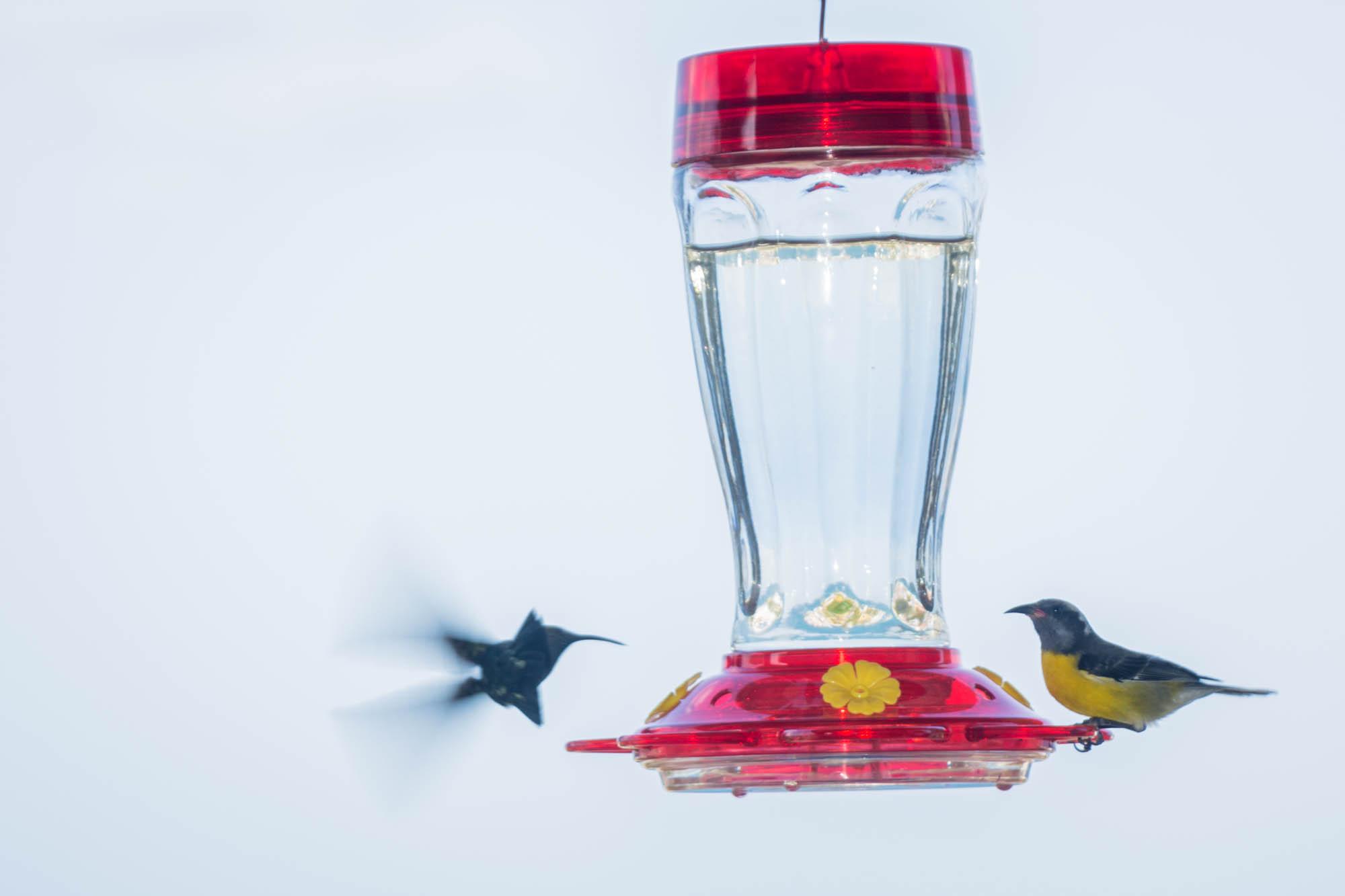 Distribution Gratuite De Mangeoires À Oiseaux Jeudi À Grand intérieur Images D Oiseaux Gratuites