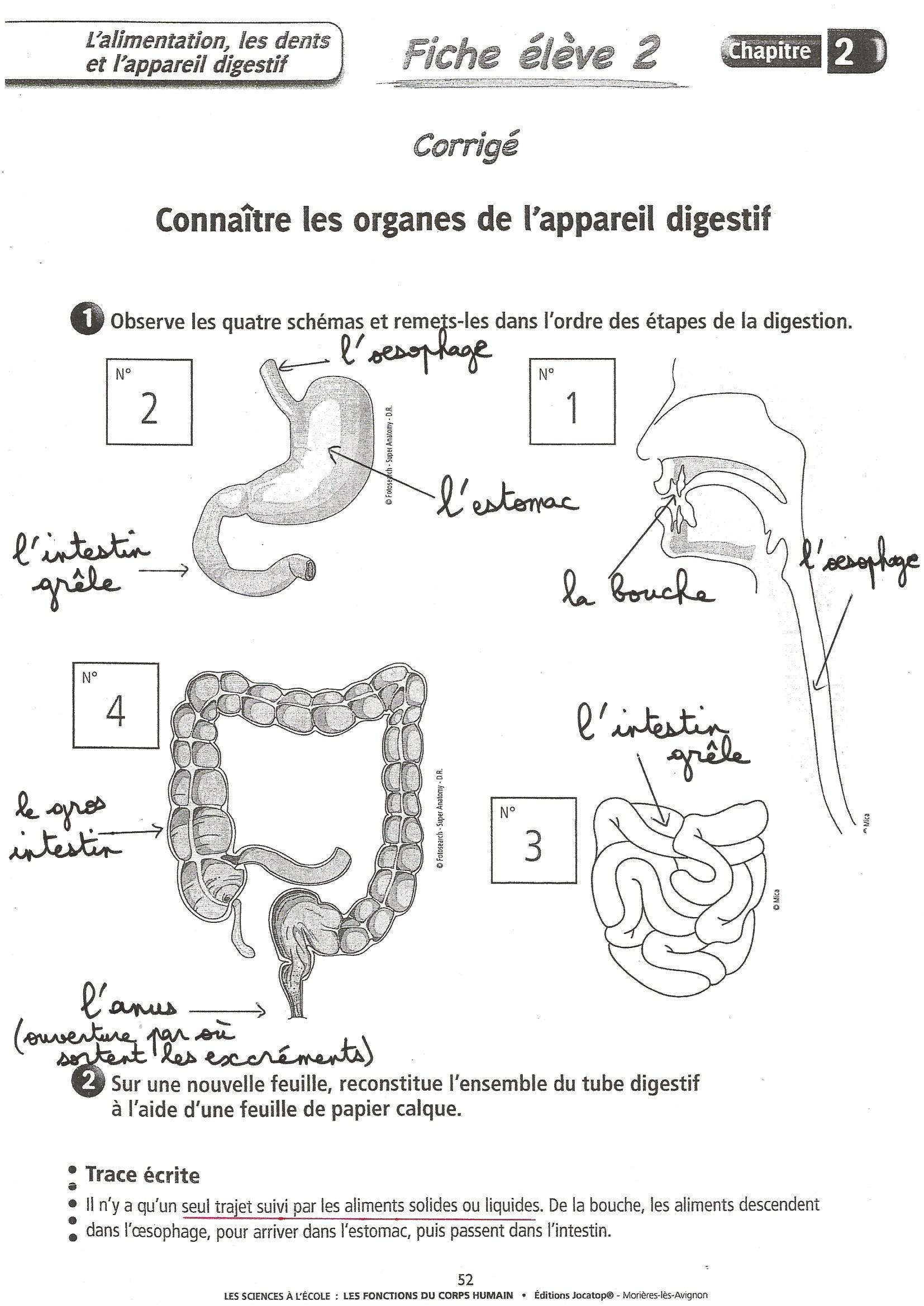 Ecole Élémre De Marnaz - Sciences Cm2 / La Digestion à Leçon Respiration Cm1